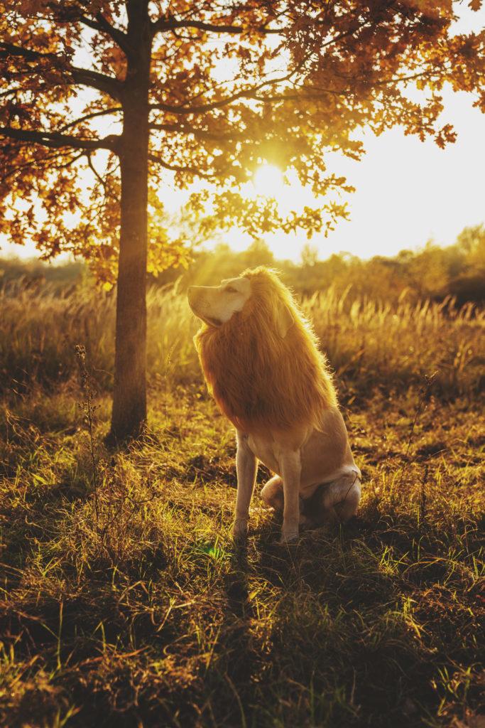Fotoshooting mit Hund - Ole darf Löwe spielen